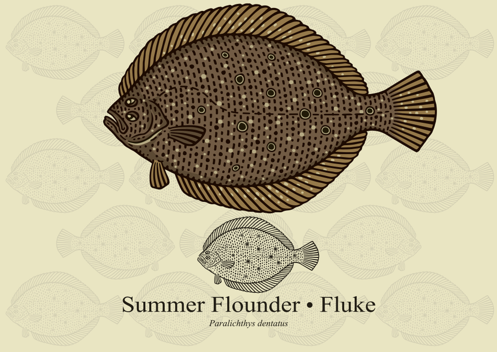 Fluke or Summer Flounder Fishing Tips