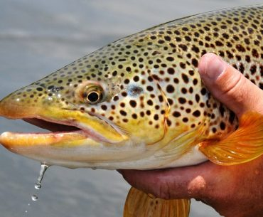 5 Ways To Catch More Trout On Your Next Day Out